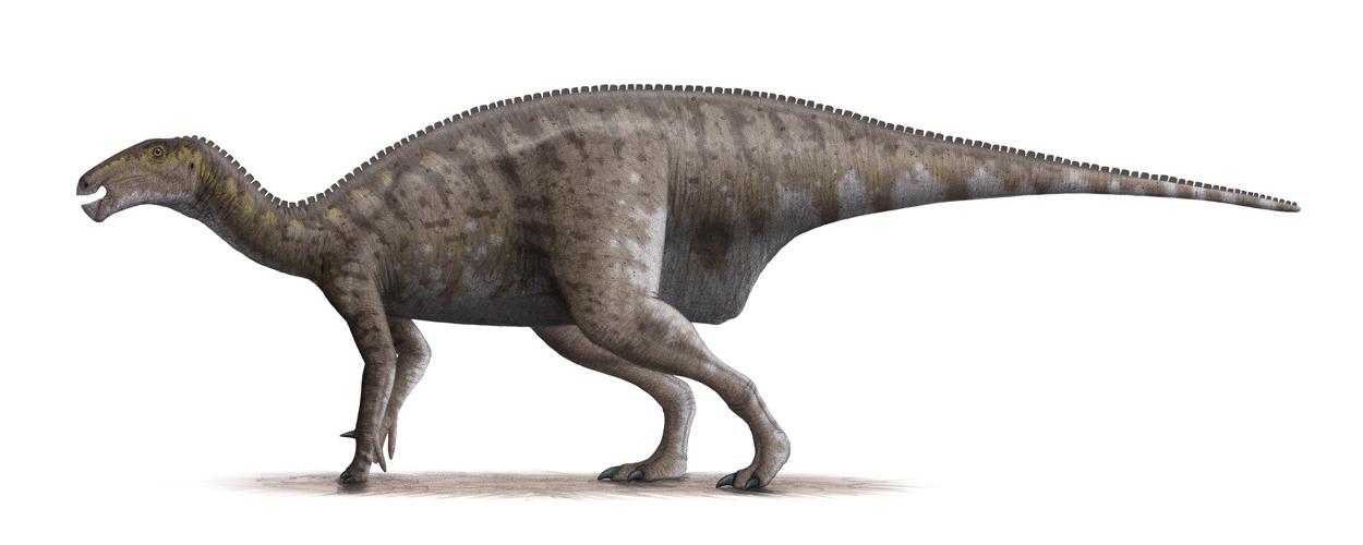 イグアノドンは肉食?餌や意味、大きさ、重さ、特徴を全て解説 - 恐竜