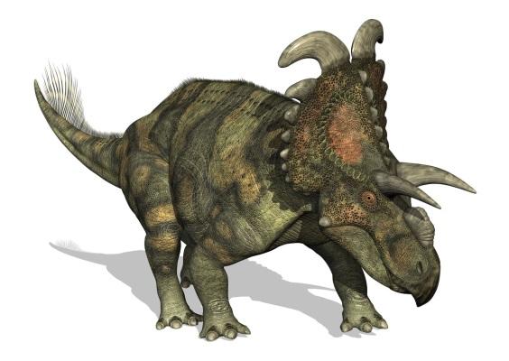 アルベルタケラトプス